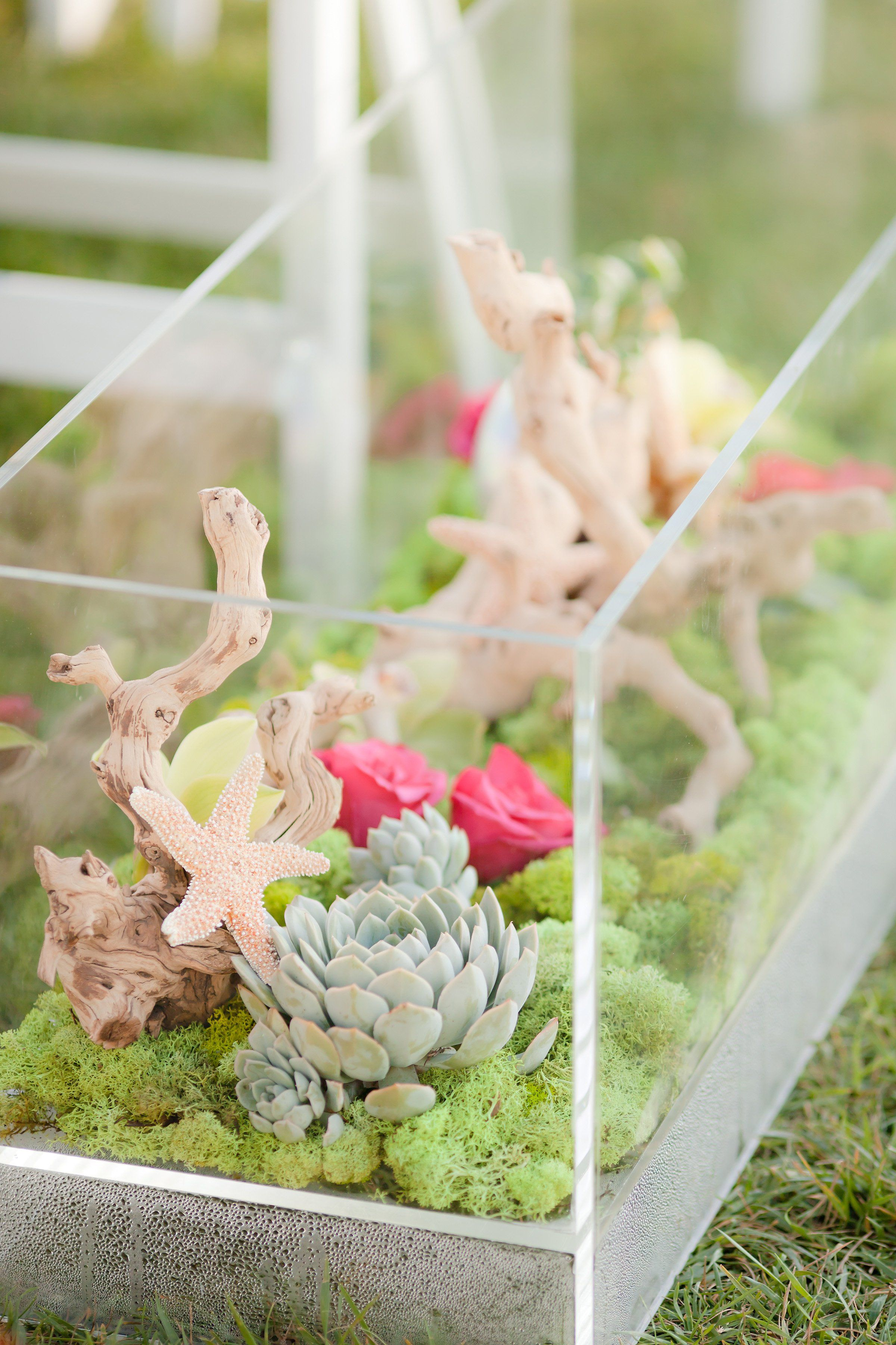 Terrariumlike vases filled with driftwood moss flowers starfish