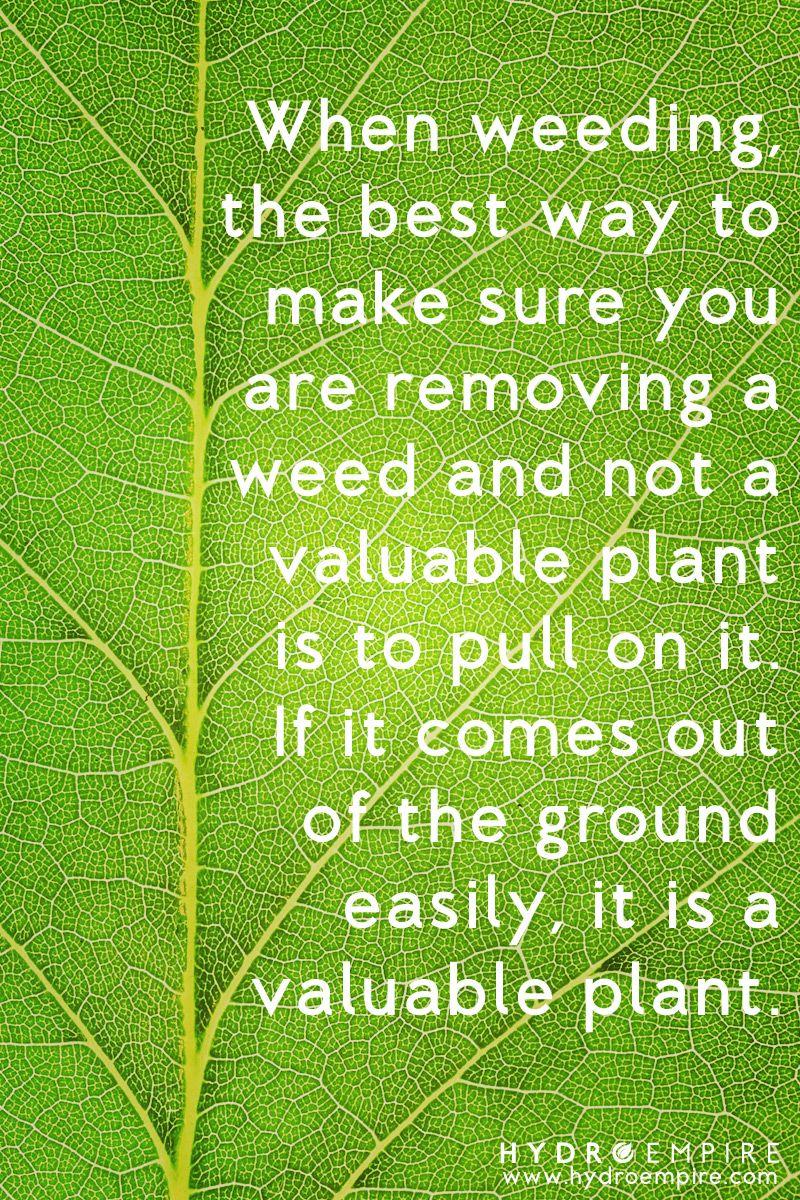 Haha Gardening Humor Gardening Memes Wisdom Quotes