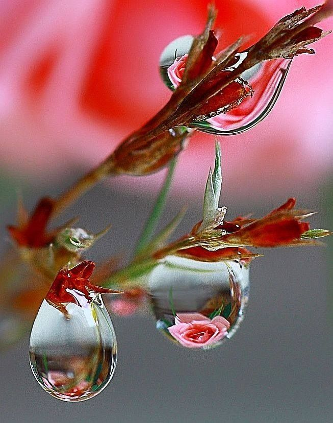 Reflections Gt Most Beautiful Photos Dew Drops Water Art Flowers