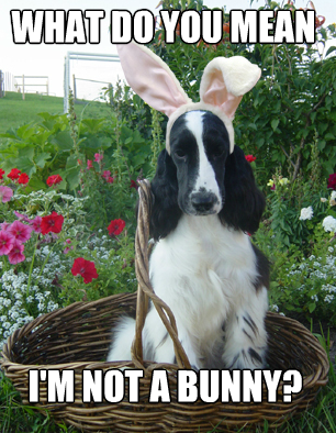 Happy Easter from our family to yours! Bunny meme, Dog care