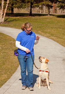 What It S Like To Train Guide Dogs For The Blind Guide Dog