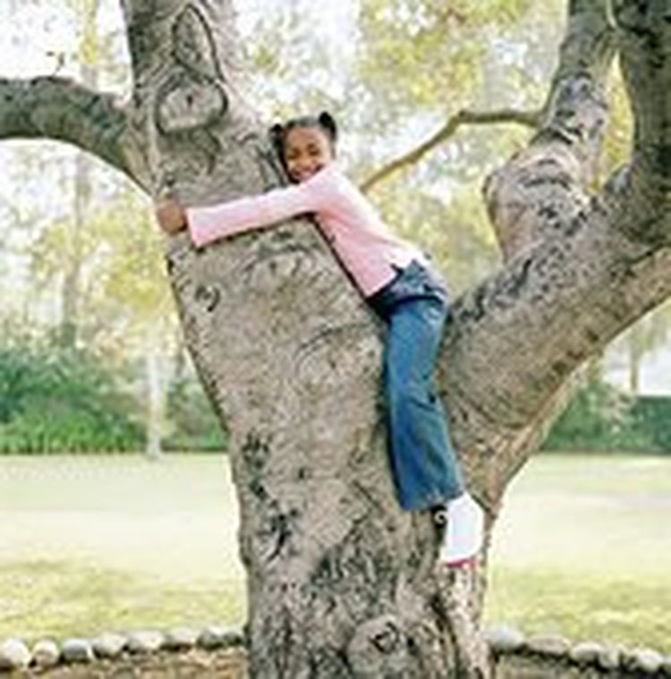 Keep Your Tree Healthy Essential Tree Care Tips Tree