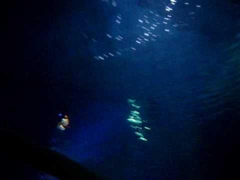 Turtle-y amazing creatures in the Ocean Tank