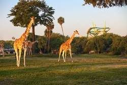 Busch Gardens Owner To Sell Stock To Public Breaking Tampa Bay
