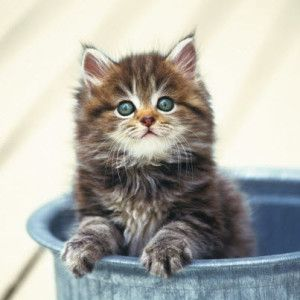 Amazing kittens (What Cats Think! – 23rd October 2012)