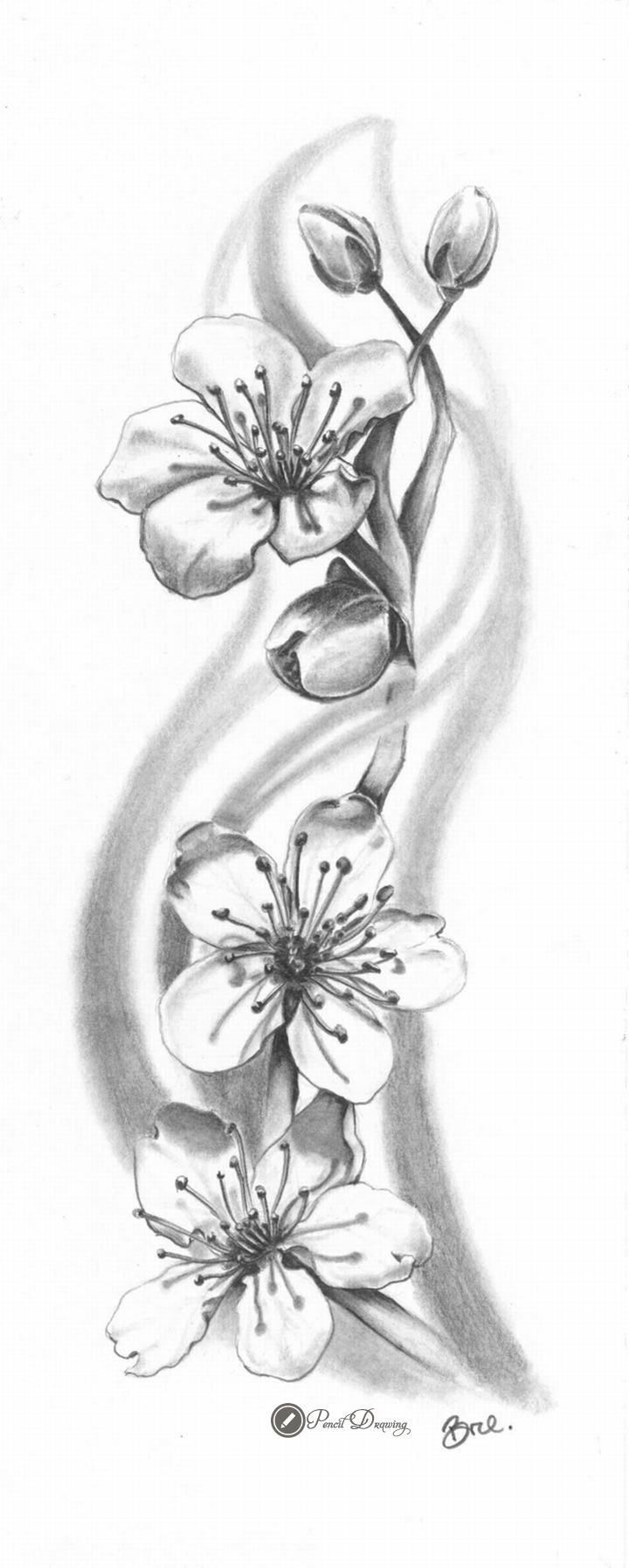 Cherry blossom sakura drawings with pencil part2 tattoos
