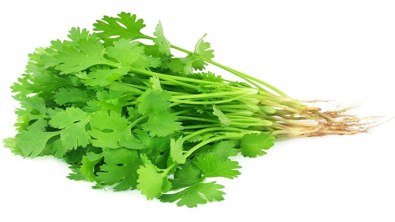 ধনেপাতার উপকারিতা ও অপকারিতা | Coriander Leaf Side Effects | Bangla Heal...  | Herbs, Avocado health benefits, Vegetables names with pictures