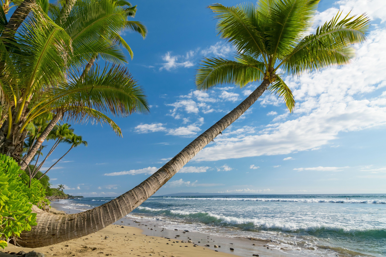 Coast Sky Trees Nature Ocean Hawaii Scenery High Resolution Palma Hd Beach Wallpapers Hd Flow Tree Nature Wallpaper Beach Wallpaper Landscape Wallpaper
