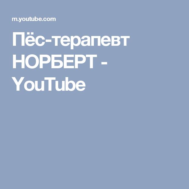 Пёс-терапевт НОРБЕРТ - YouTube