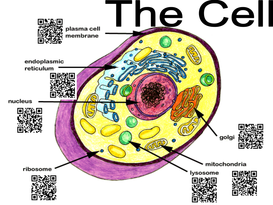 Cell Code