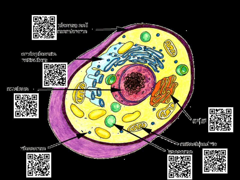 Qr code anatomy