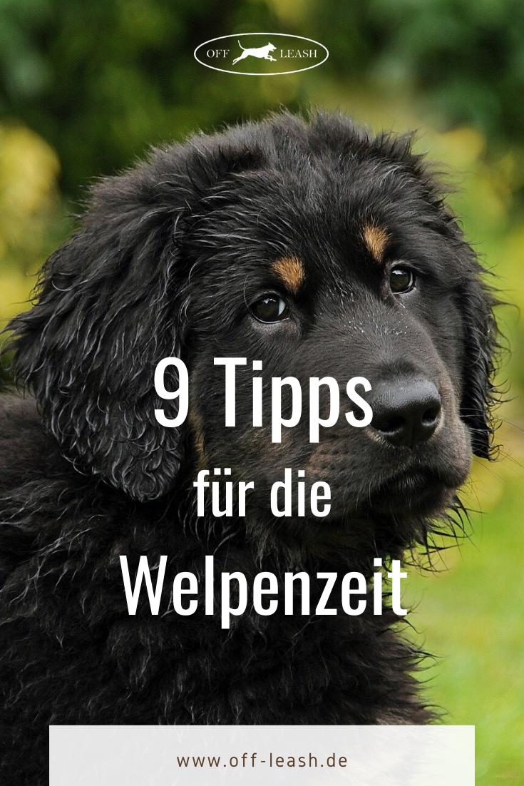 Das Einmaleins Der Welpenerziehung 9 Tipps Fur Die Welpenzeit In 2020 Welpenerziehung Welpen Hundehaltung