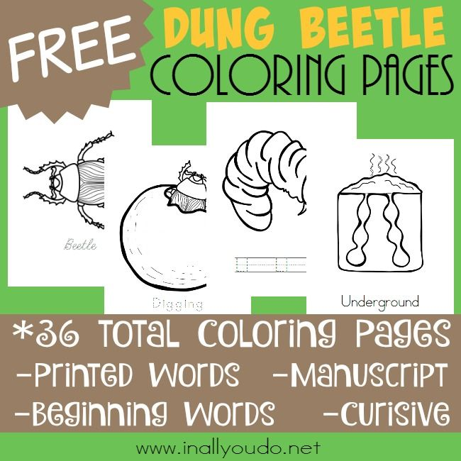 Dung Beetle Life Cycle Coloring Pages Cool Coloring Pages