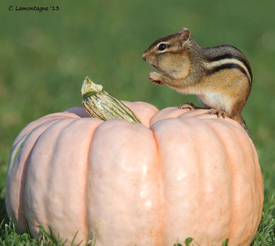 Autumn chippy by Corinne Lamontagne on 500px