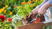 Pro landscaping tips that don't break the bank