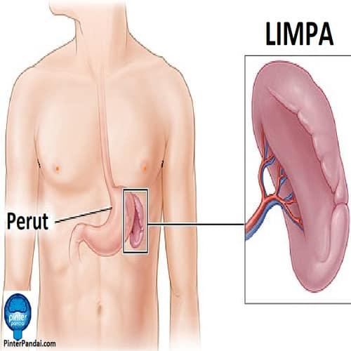 Pin On Ipa Science