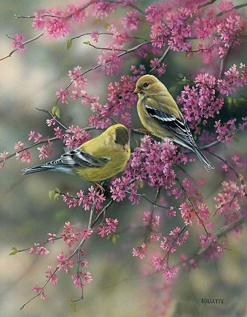 Pajaritos En Primavera Pintura De Pajaros Arte De Aves Pinturas De Aves