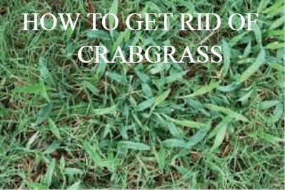 How To Get Rid Of Crabgrass In Lawn Naturally Fancy Gardening In 2020 Crab Grass Lawn Grass Types How To Get Rid
