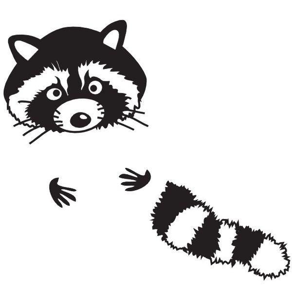 mr raccoon  waschbär von den streifzügen schwarz