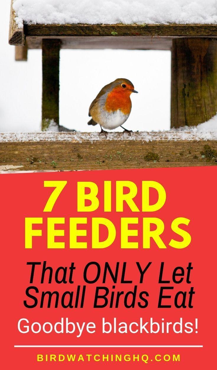 Best Bird Feeders For Small Birds (7 PROVEN Choices #smallbirds
