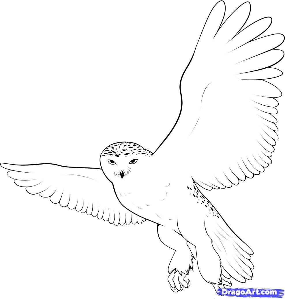 how to draw a snowy owl step 9 art drawings owl snowy owl