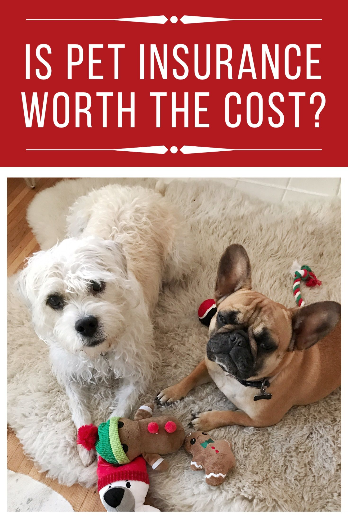 Is pet insurance worth the cost pet insurance cost pet