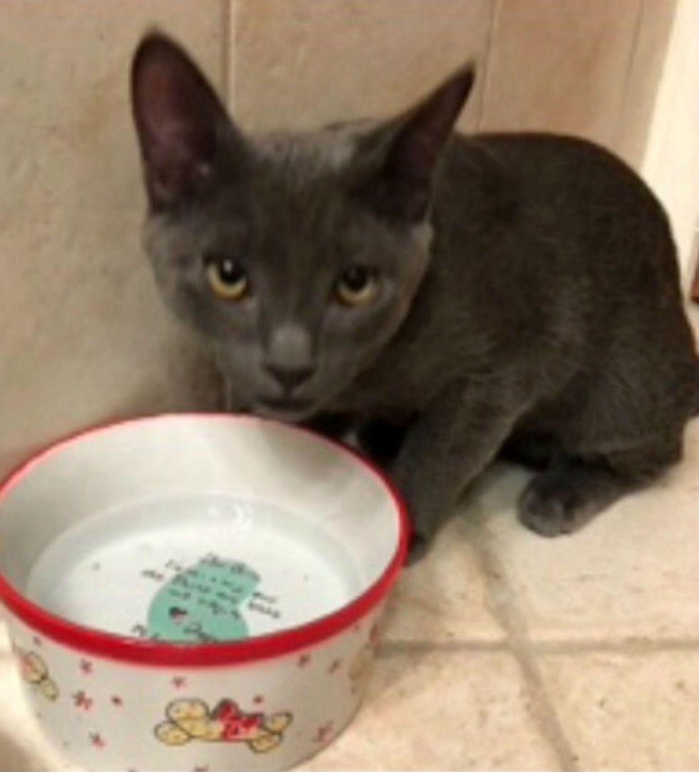 Bandit Kitten rescue, All about animals, Animals