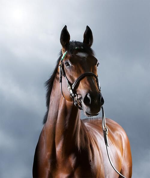 Frankel, picture released for his 6th birthday.