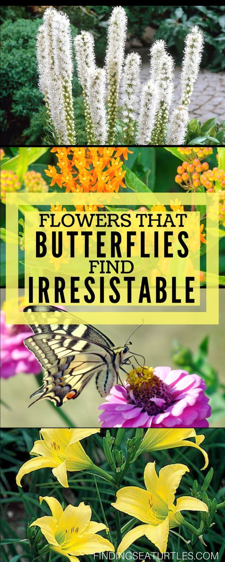 12 Perennials That Butterflies Find Irresistible -