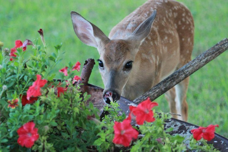 Want A Little Wildlife In Your Yard Here Are 5 Plants That
