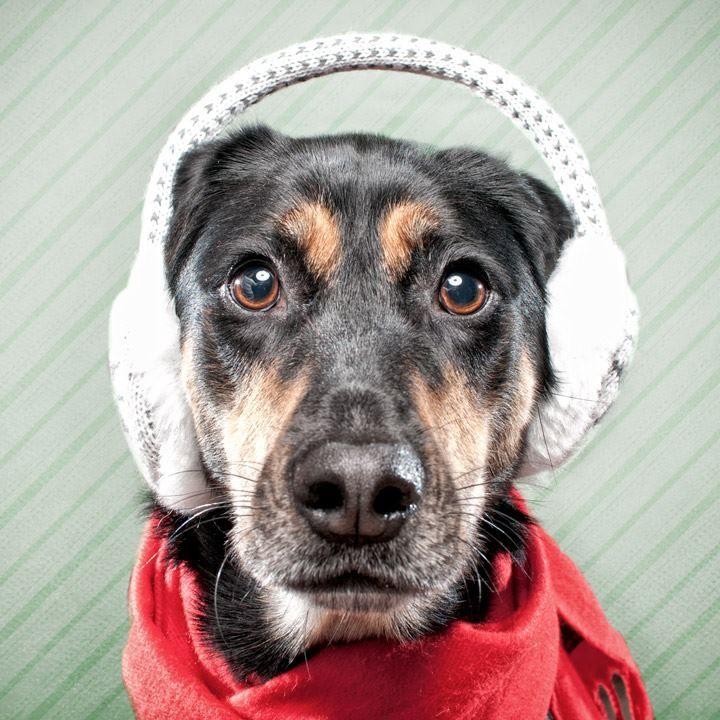 Ear Muffs Dog Holiday Christmas Dog Little Dogs