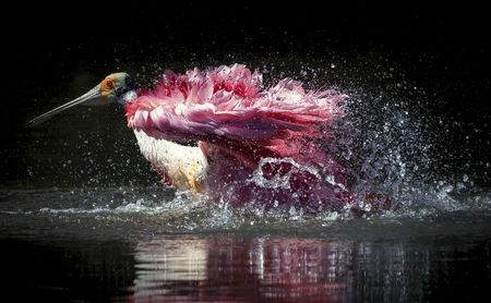 Splash!  Photo by Claudia Daniels — National Geographic Your Shot