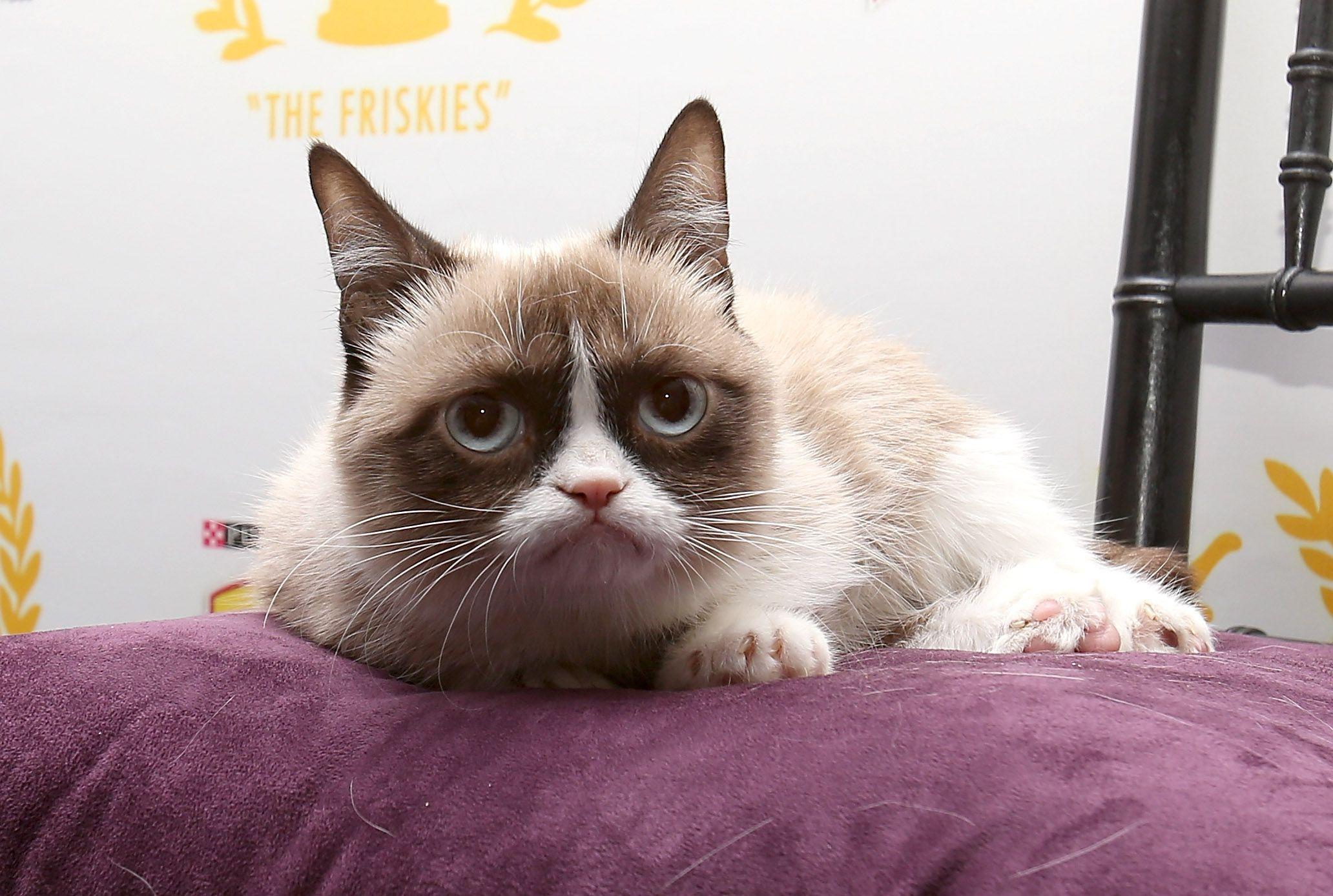 15 Facts About Grumpy Cat Grumpy cat, Grumpy cat meme