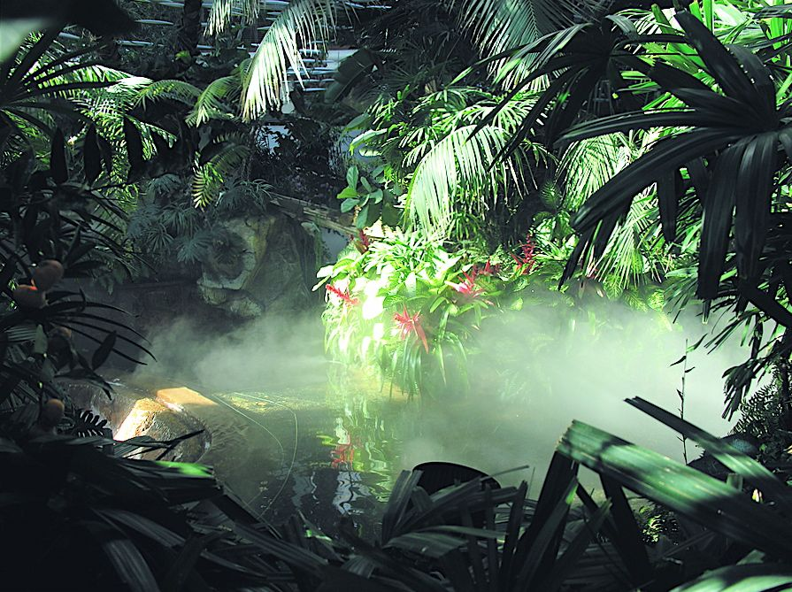 11+ Rainforest Animals And Plants Images
