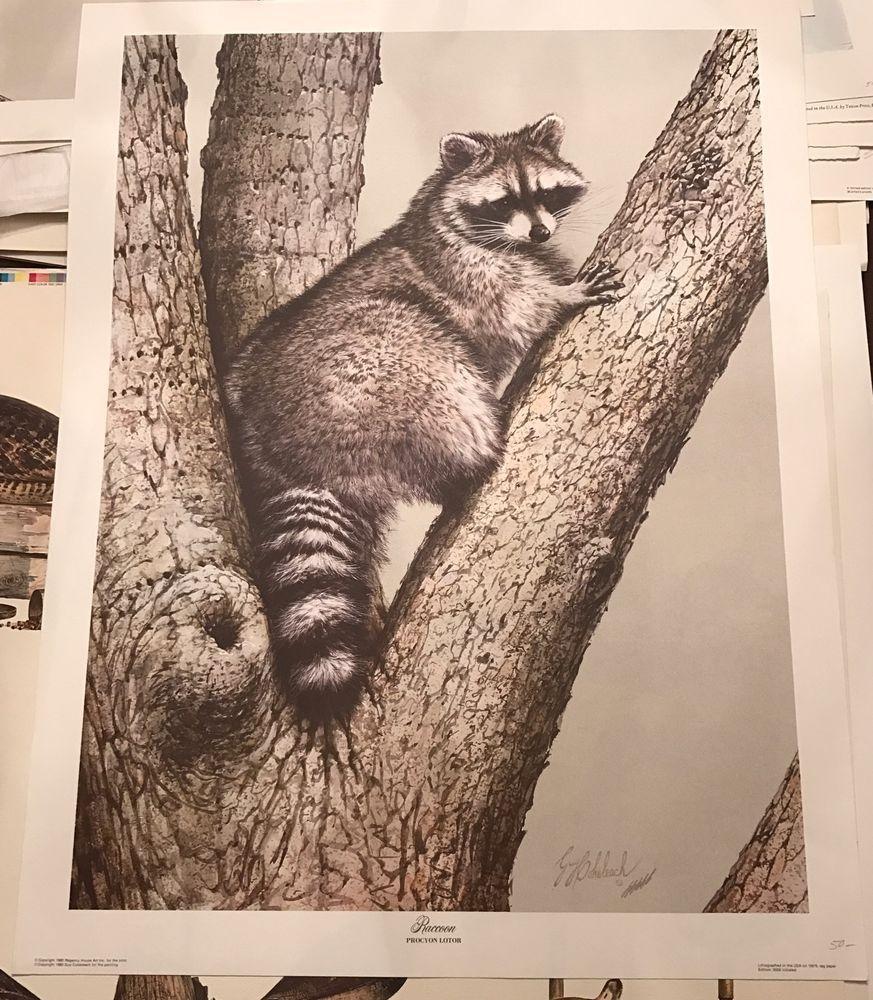 Guy Coheleach Up A Tree Raccoon Limited Edition Print Signed Ebay Limited Edition Prints Raccoon Print