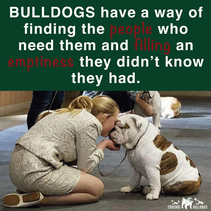 Bulldogs Have A Way Of Finding The People Who Need Them And Filling An Emptiness They Didn T Know They Had Bulldog Puppies Bulldog Breeds Bulldog Quotes