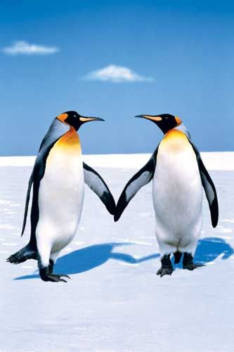 penguins holding hands | Penguins | Penguins, Penguin love ...