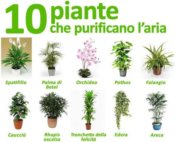 10 Piante Che Depurano E Purificano L Aria Di Casa Giardino Di