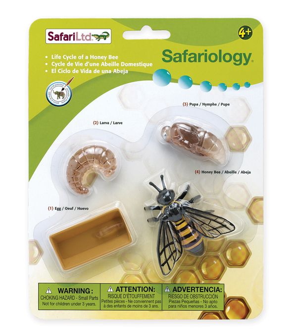 Honeypot Preschool: Life Cycle Of A Honey Bee (Safariology)