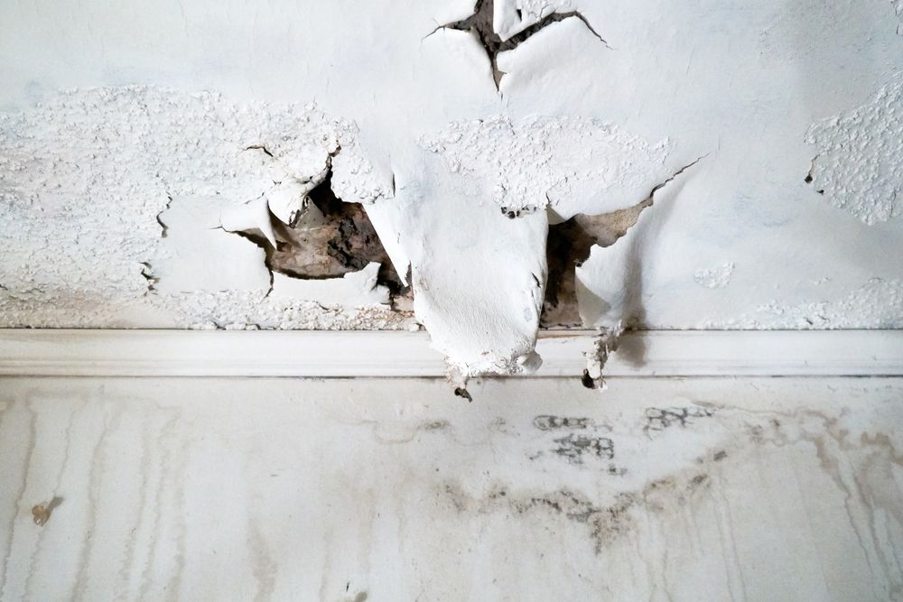 How long does it take mold to grow in a flooded home