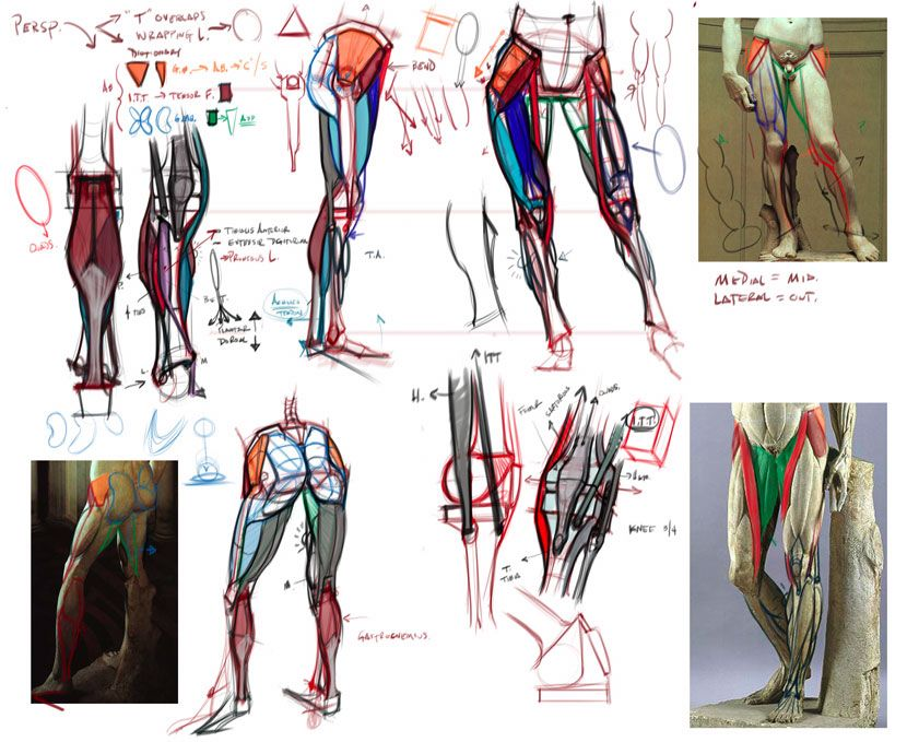 Analytical Figure Drawing Master Classes Drawing Foundation Classes