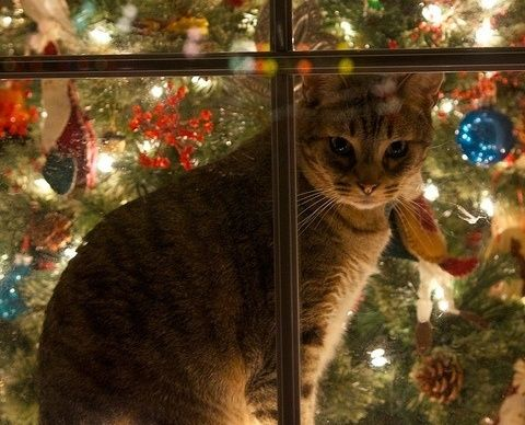 Christmas Window and a cozy cat all warm indoors! where all Dogs and Cats belong, They are Family! Christmas Cats, Christmas Animals, Country Christmas, Christmas Lights, All Things Christmas, White Christmas, Christmas Holidays, Merry Christmas, Christmas Decorations