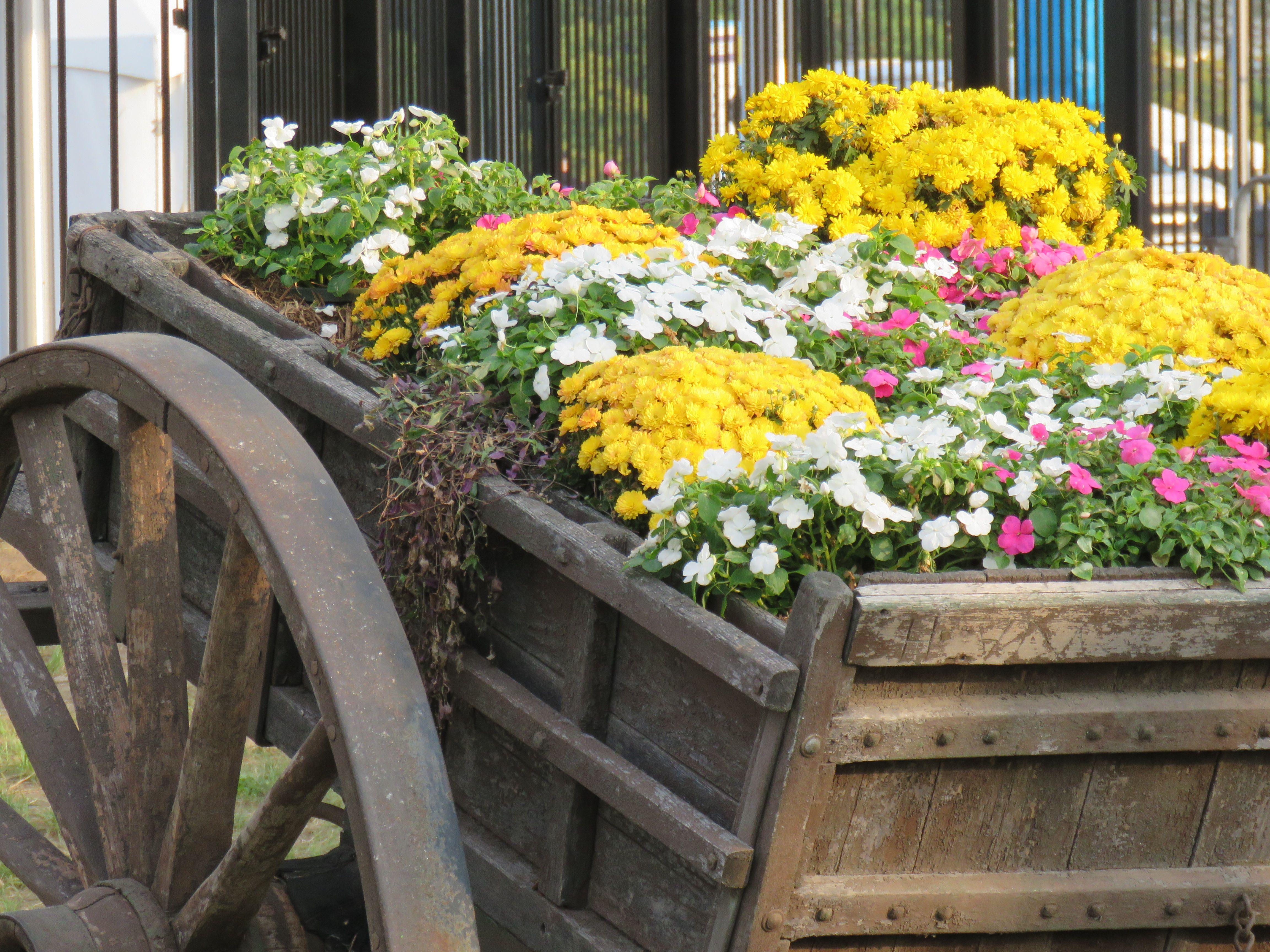 Minnesota State Fair Flower Garden Design Garden Design Flower Garden
