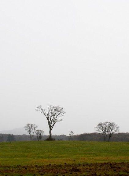 삼다수목장, 제주도, 2012.1.3