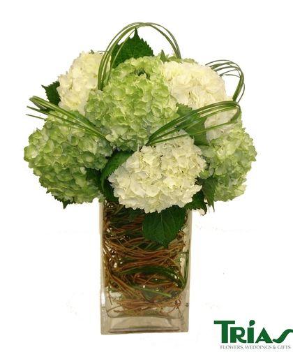 White green hydrangea this plush arrangement features
