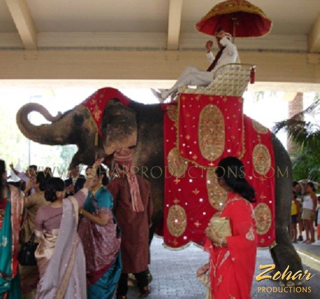 Elephant and other Arabian style entertainment booked through www.ZoharProductions.com  Contact: info@zoharproductions.com