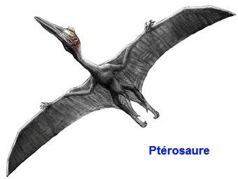 Photo pterosaure dinosaure pinterest photos - Dinosaur volant ...