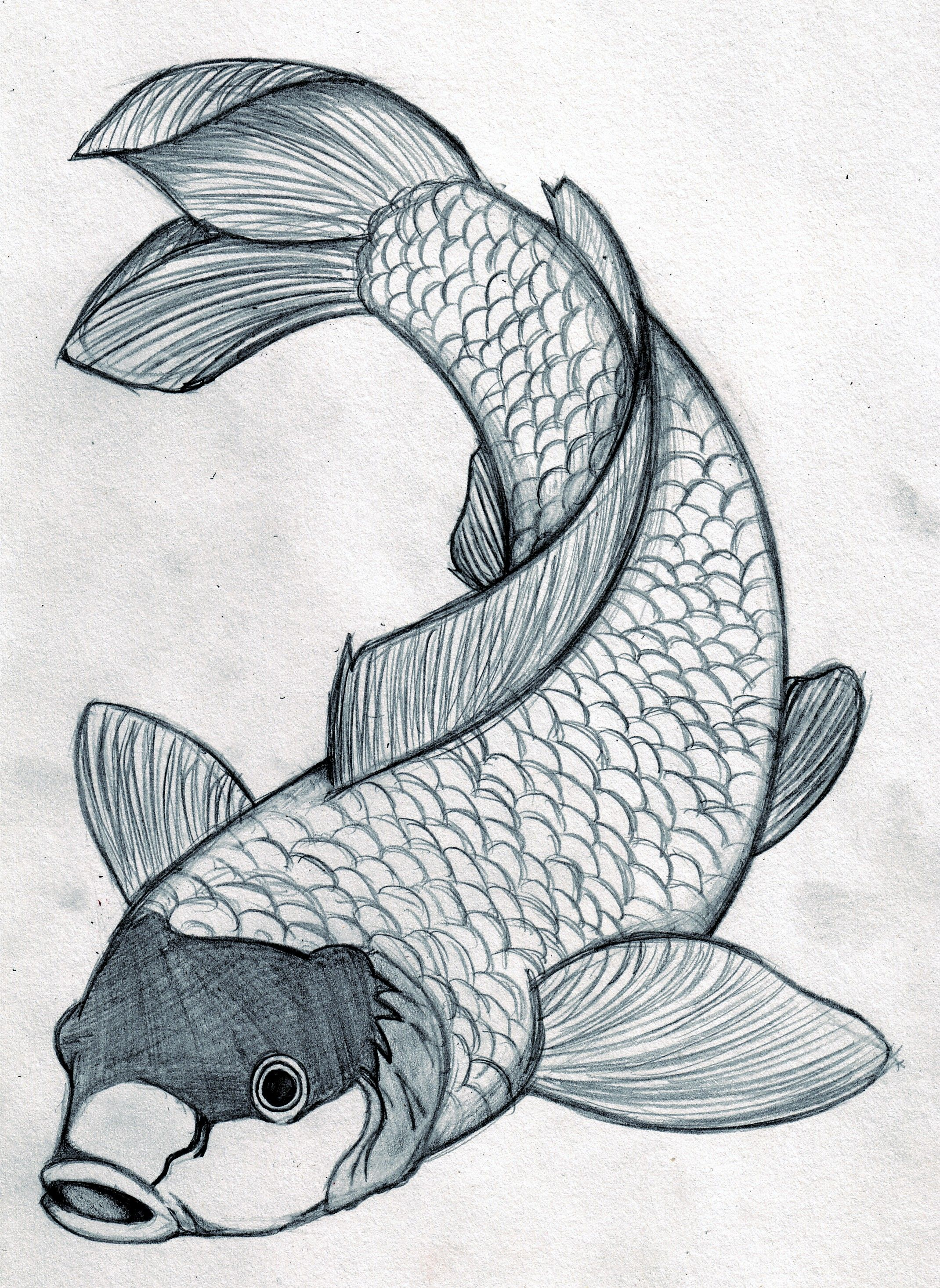 This is an image of Tactueux Japanese Koi Fish Drawing