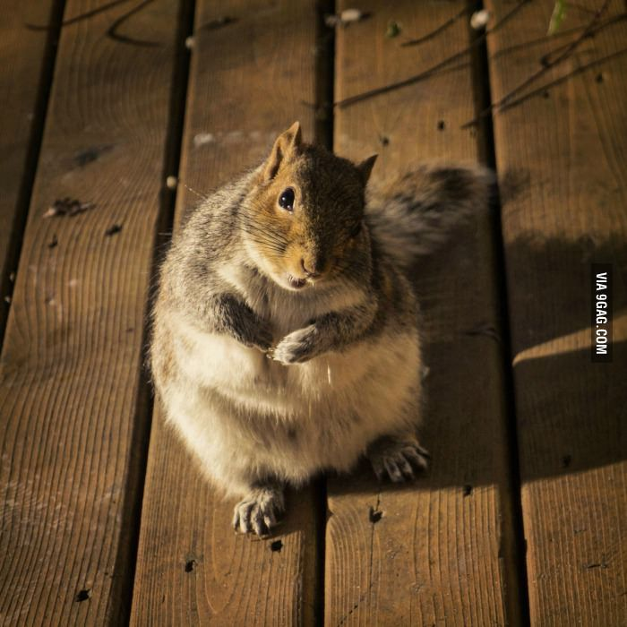 So if you could refill the bird feeder, that's be great. - 9GAG