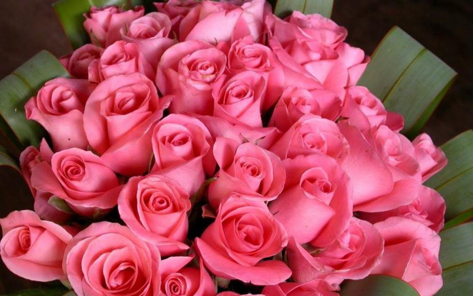 Dozen Pink Roses Dozen Pink Roses Deseos De Pasion Pinterest